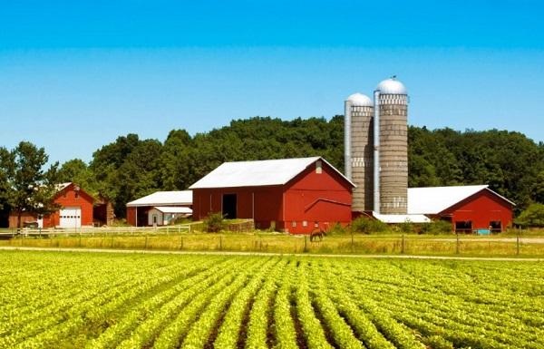 темы wordpress для фермерского хозяйства